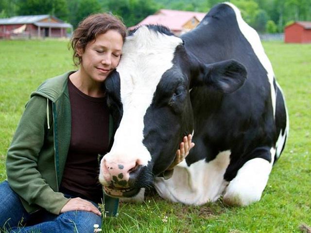 Khách sạn Woodstock Farm Animal Sanctuary nơi có một vẻ đẹp thanh bình và giản dị