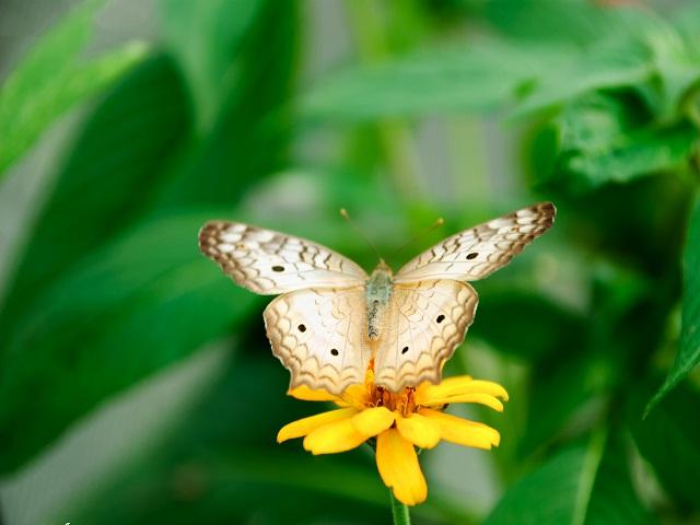 Kim tự tháp rừng mưa ở Vườn Moody là nơi sinh sống của các loài bướm