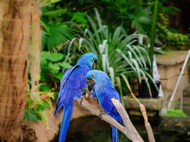Những chú vẹt tuyệt đẹp ở Vườn thú Houston