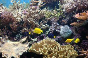 Chiêm ngưỡng những loài sinh vật biển ở thủy cung trung tâm thành phố Houston