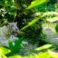 Vườn thú Bali điểm đến vô cùng hút khách