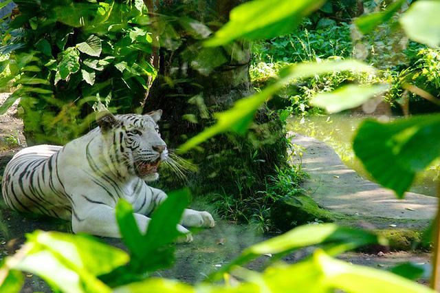 Vườn thú Bali có rất nhiều loài động vật quý hiếm sinh sống