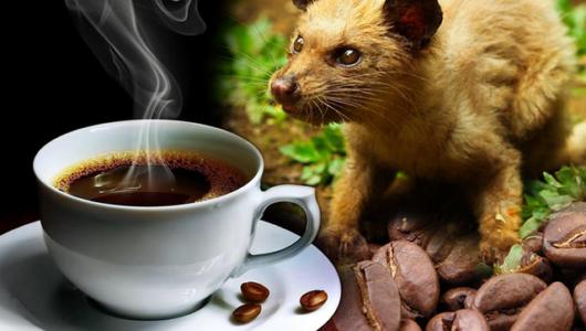 Cà phê chồn – thức uống nổi danh trên đảo Bali