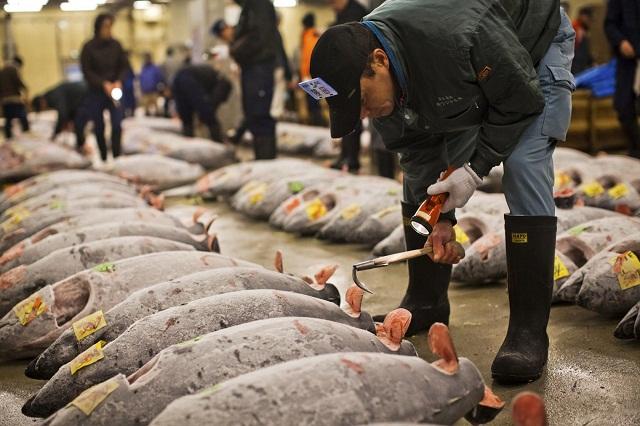 Chợ cá Tsukiji nổi tiếng với các phiên bán đấu giá cá ngừ đại dương