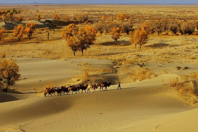 Khung cảnh yên bình tại sa mạc Taklamakan