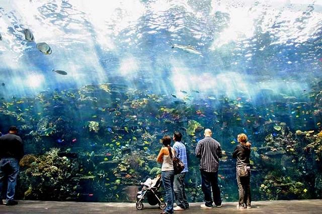 """Thủy cung Georgia Aquarium như một """"đại dương"""" thu nhỏ"""