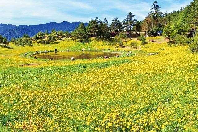 Lishan nơi được thiên nhiên ưu ái với phong cảnh mỹ miều