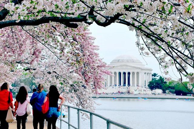 Mỗi năm Washington đón tiếp số lượng lớn khách du lịch ghé thăm vào dịp lễ hội hoa anh đào