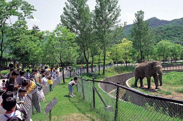 Có nhiều loài vật khác nhau mà bạn sẽ tìm thấy ở Seoul Grand Zoo