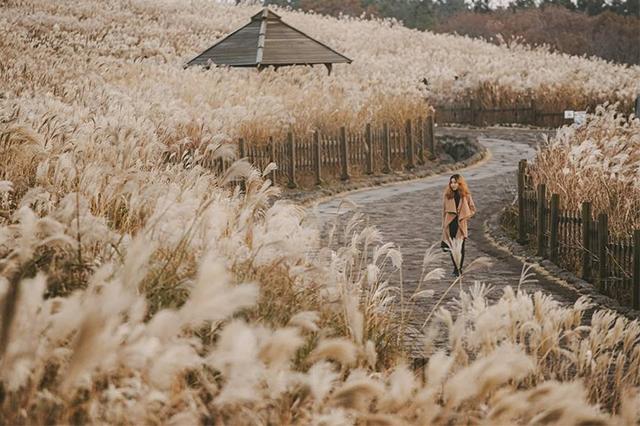 Đảo Jeju nơi hẹn hò lãng mạn