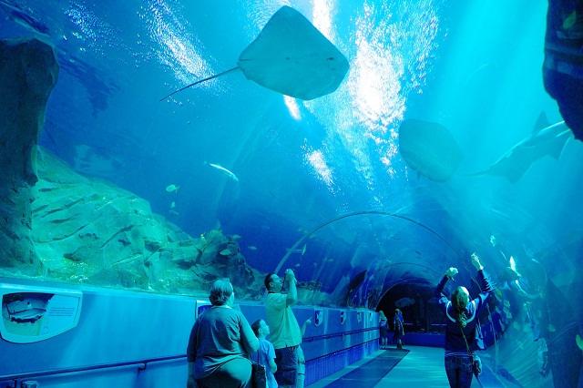 Thủy cung Miami Seaquarium – Nơi giúp bạn thỏa sức khám phá thế giới biển