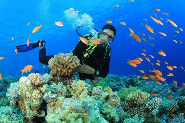 Đảo Cỏ Ống là nơi sở hữu những rạn san hô đẹp lung linh với nhiều sắc màu khác nhau