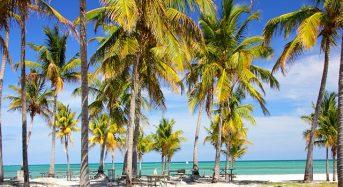 Những công viên và khu vườn tuyệt vời nhất Miami