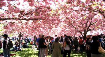 Top 3 sự kiện lễ hội mùa xuân nổi bật ở New York